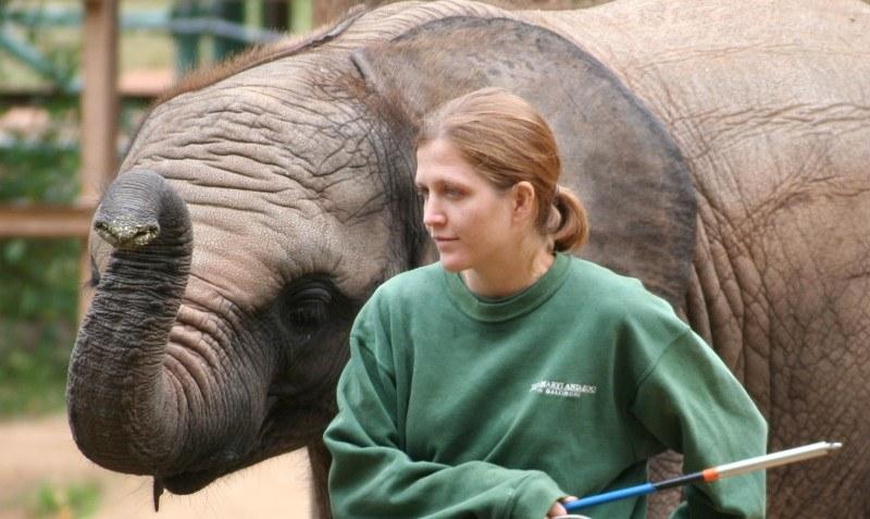 Baby_elephant_and_zoo_keeper_-Maryland_Zoo.jpg?mtime=20201110102238#asset:37476