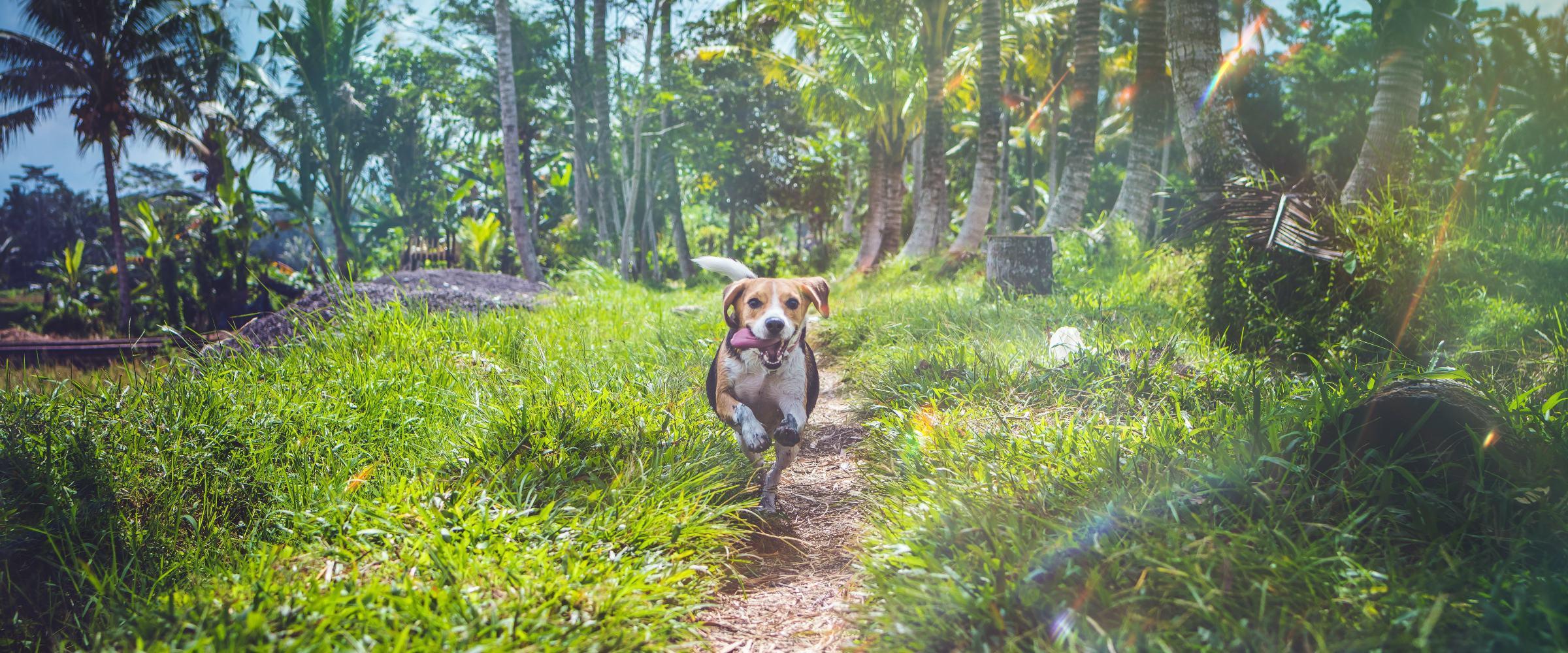 Best Orlando neighborhoods for dog owners