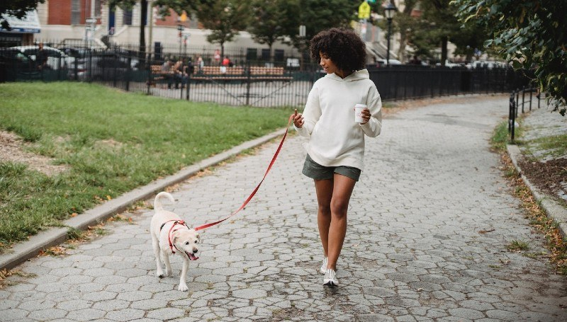 happy-dog-philly.jpg?mtime=20210106173807#asset:37592