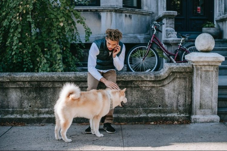 These are 4 of the Best Neighborhoods in DC for Dog Owners