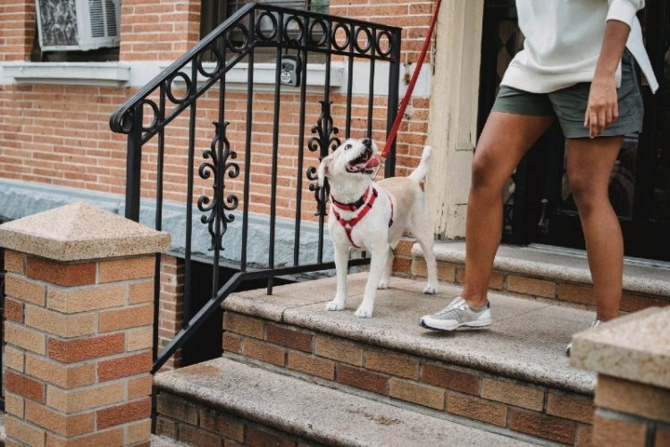 The 4 Best Neighborhoods in Philadelphia if you Own a Dog