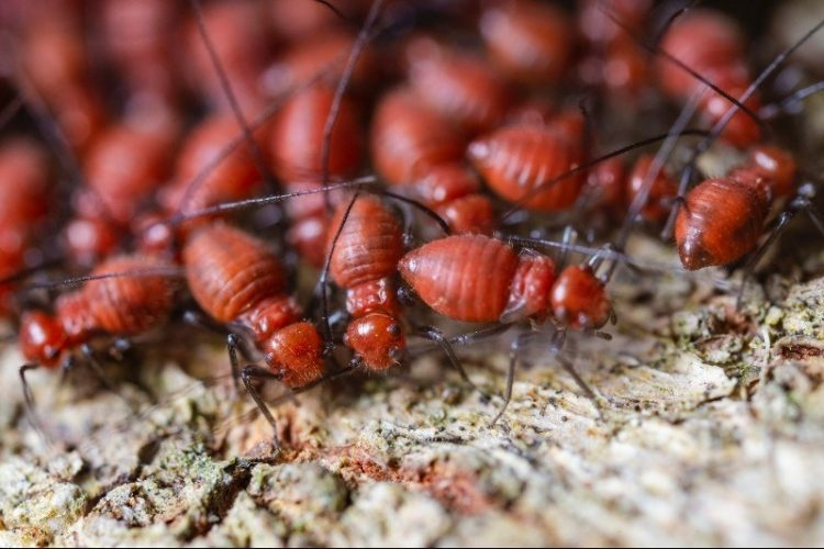  Pest Inspection: Why it's Important to Check Before Selling Your Home