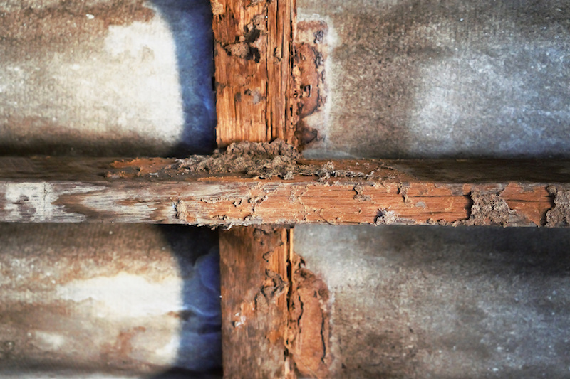 termite-damage.jpeg?mtime=20200812192355#asset:37205